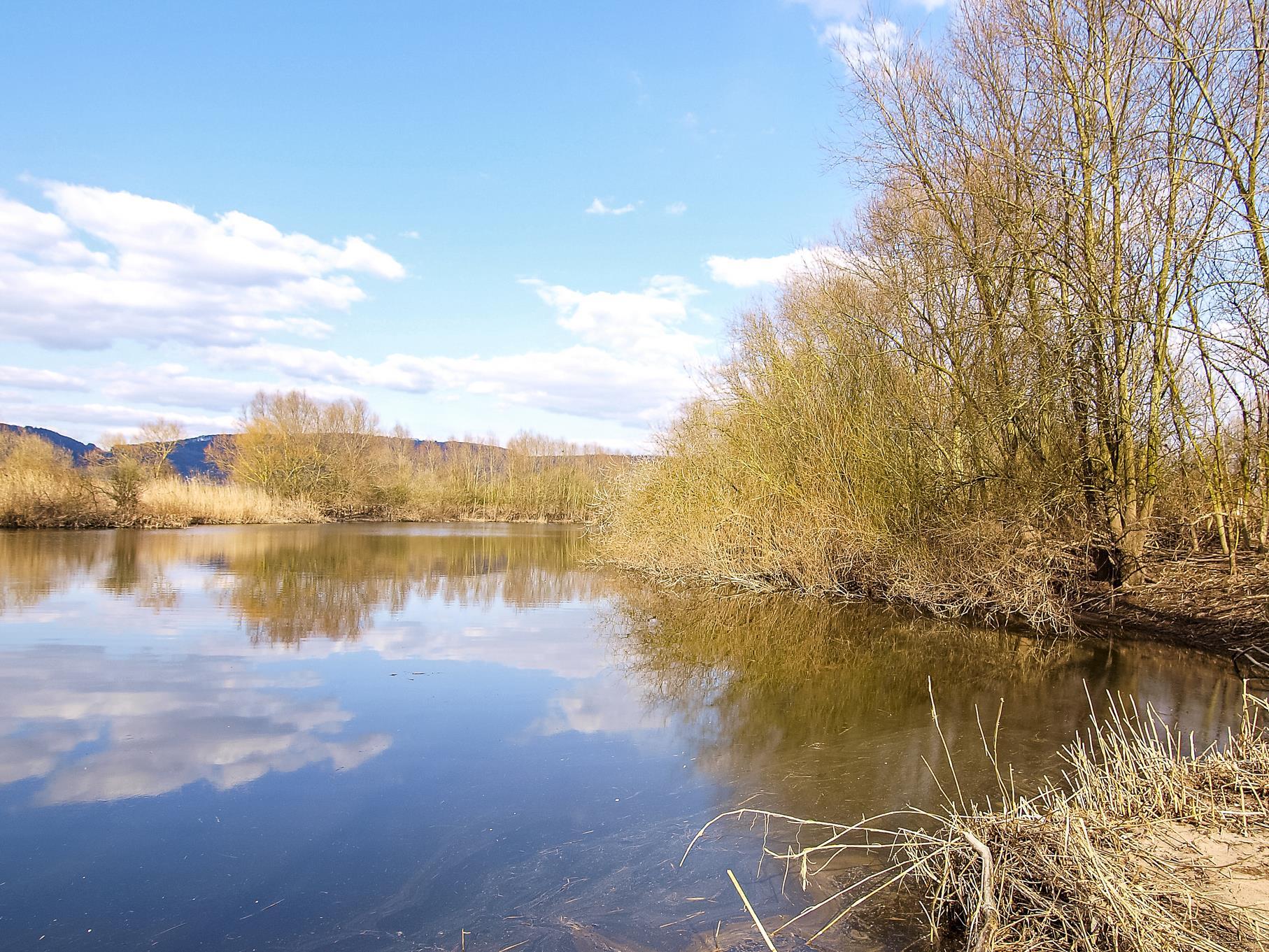 In den Uferbereichen der älteren Teiche stehen viele Weiden.