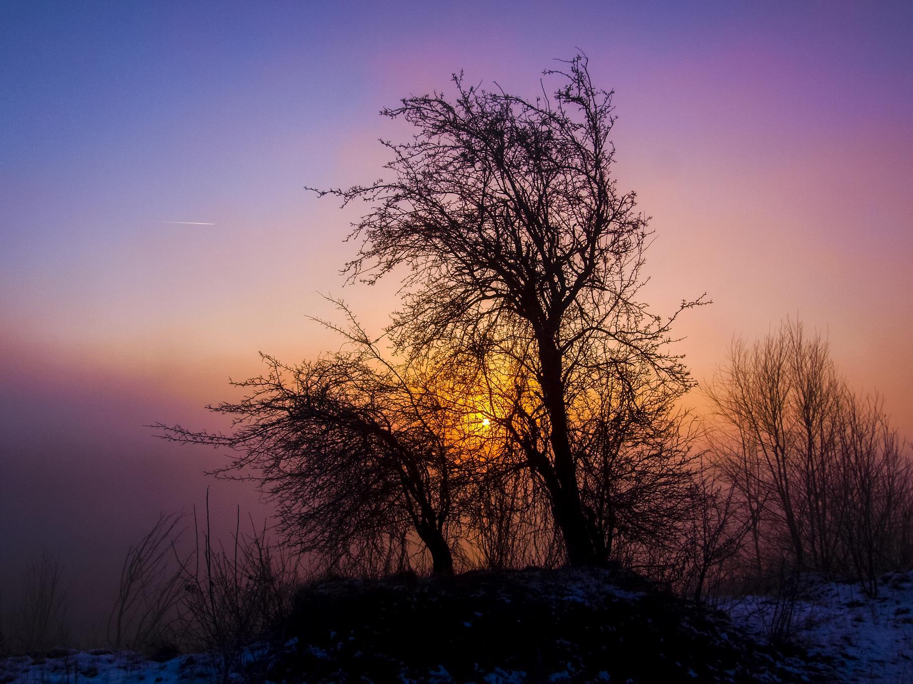 Ein Baum am Rundweg in der Morgensonne.