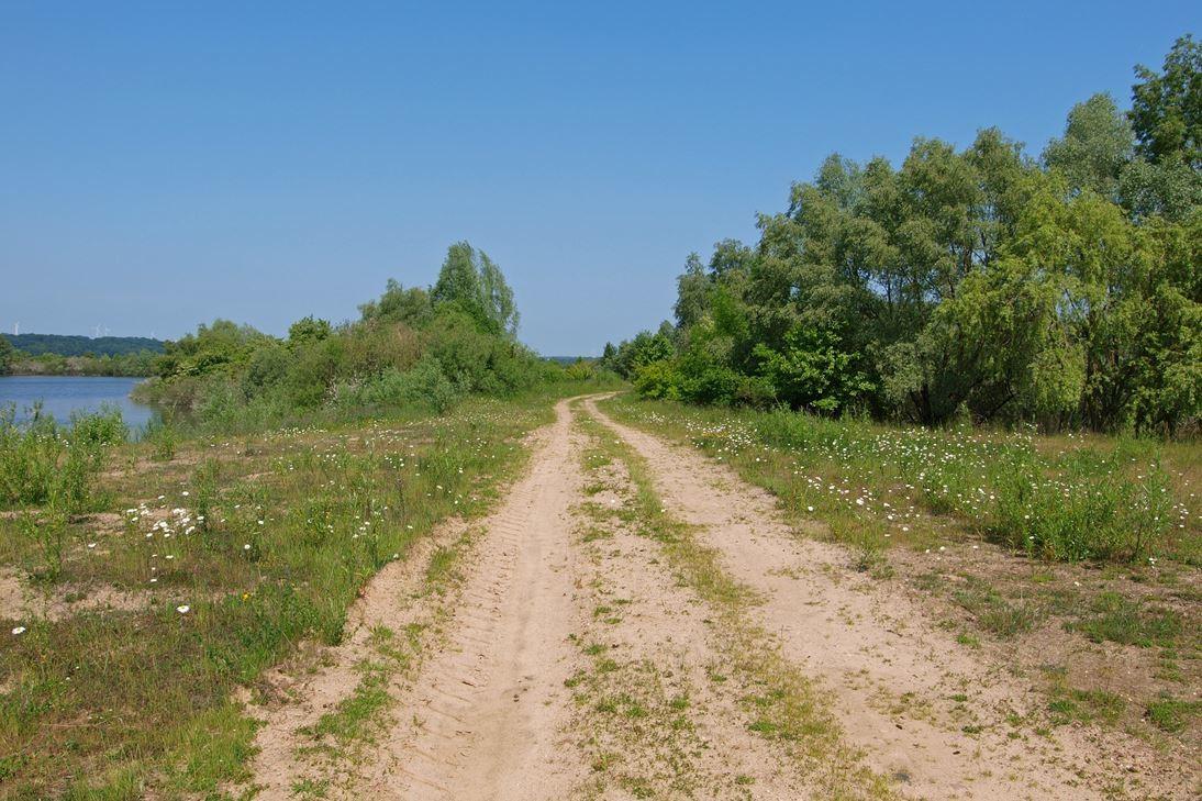 Weg durch das Naturschutzgebiet. - Foto: Kathy Büscher