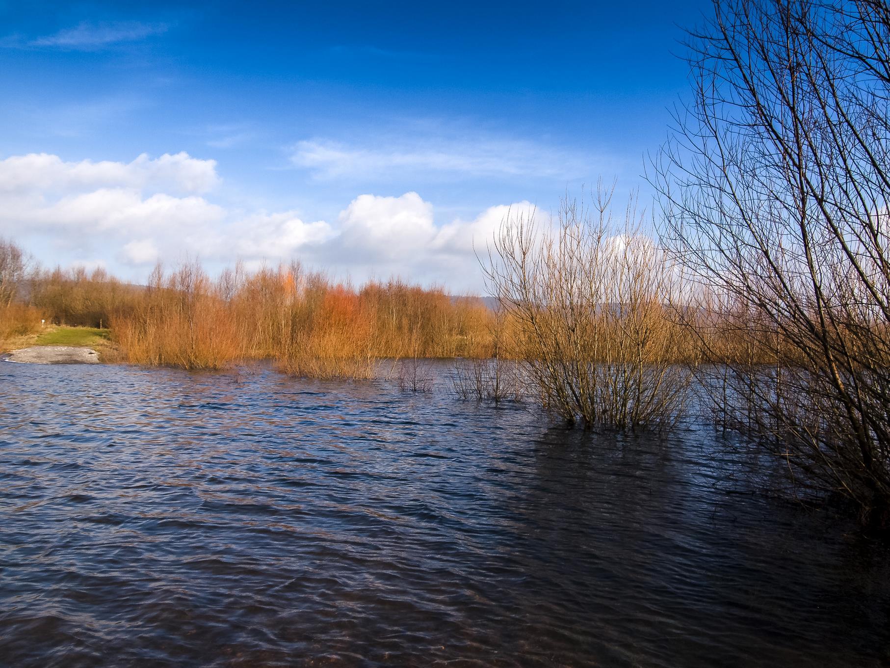 Der Rundweg und die Weiden stehen zu einem Großteil unter Wasser.