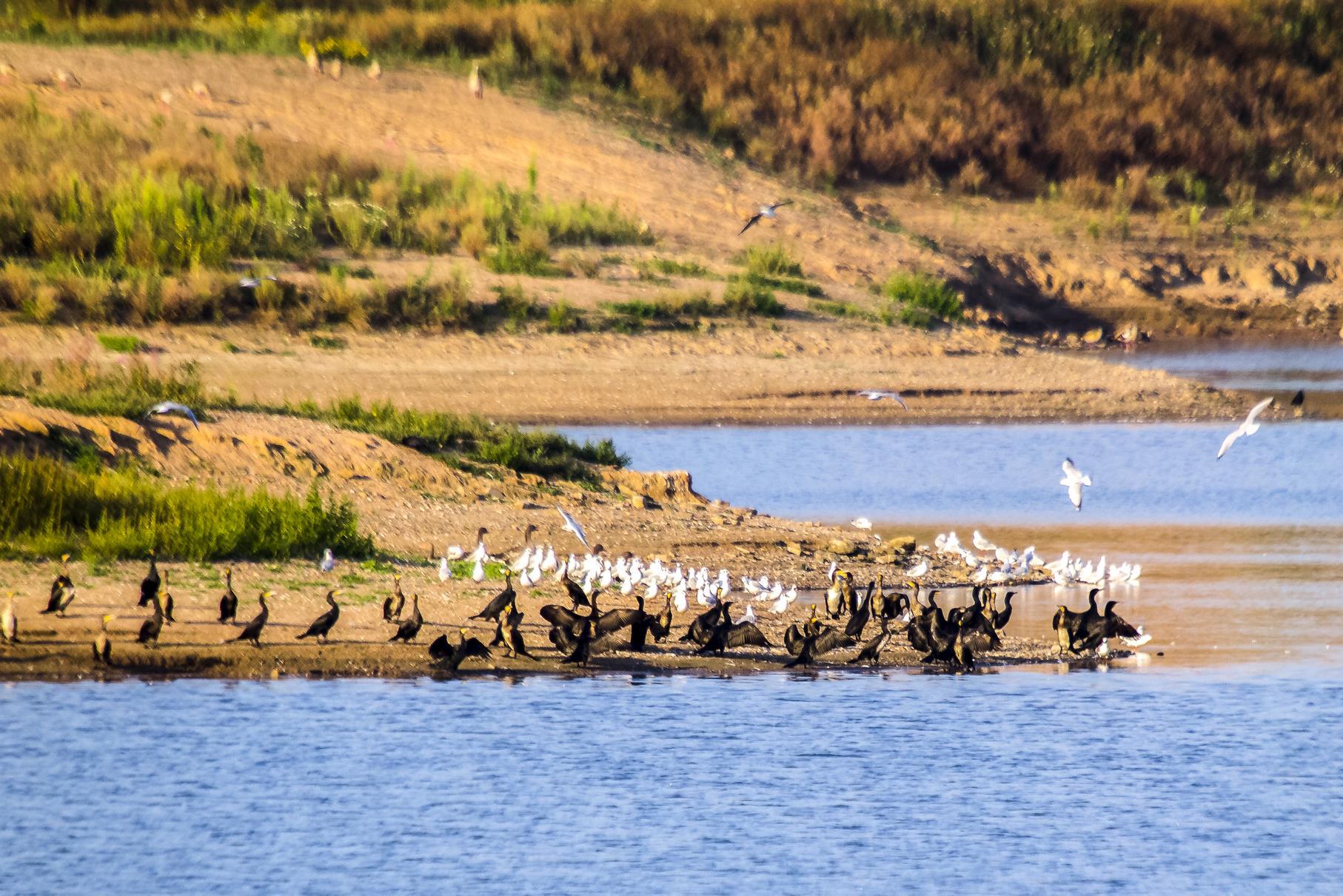 Möwen und Kormorane haben sich am Fuß der flachen Insel eingefunden.
