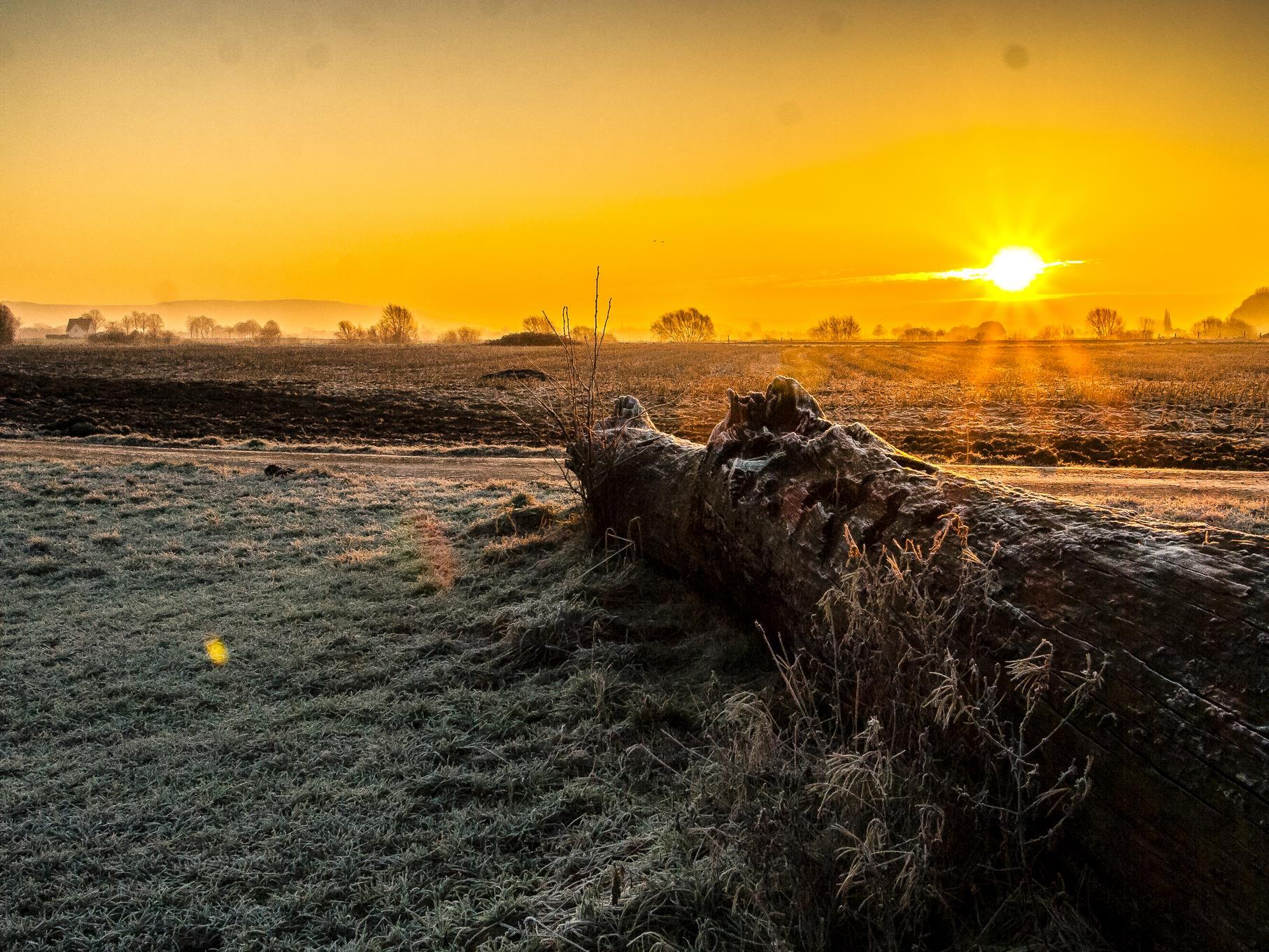 Die Mooreiche am östlichen Teich in der aufgehenden Sonne.