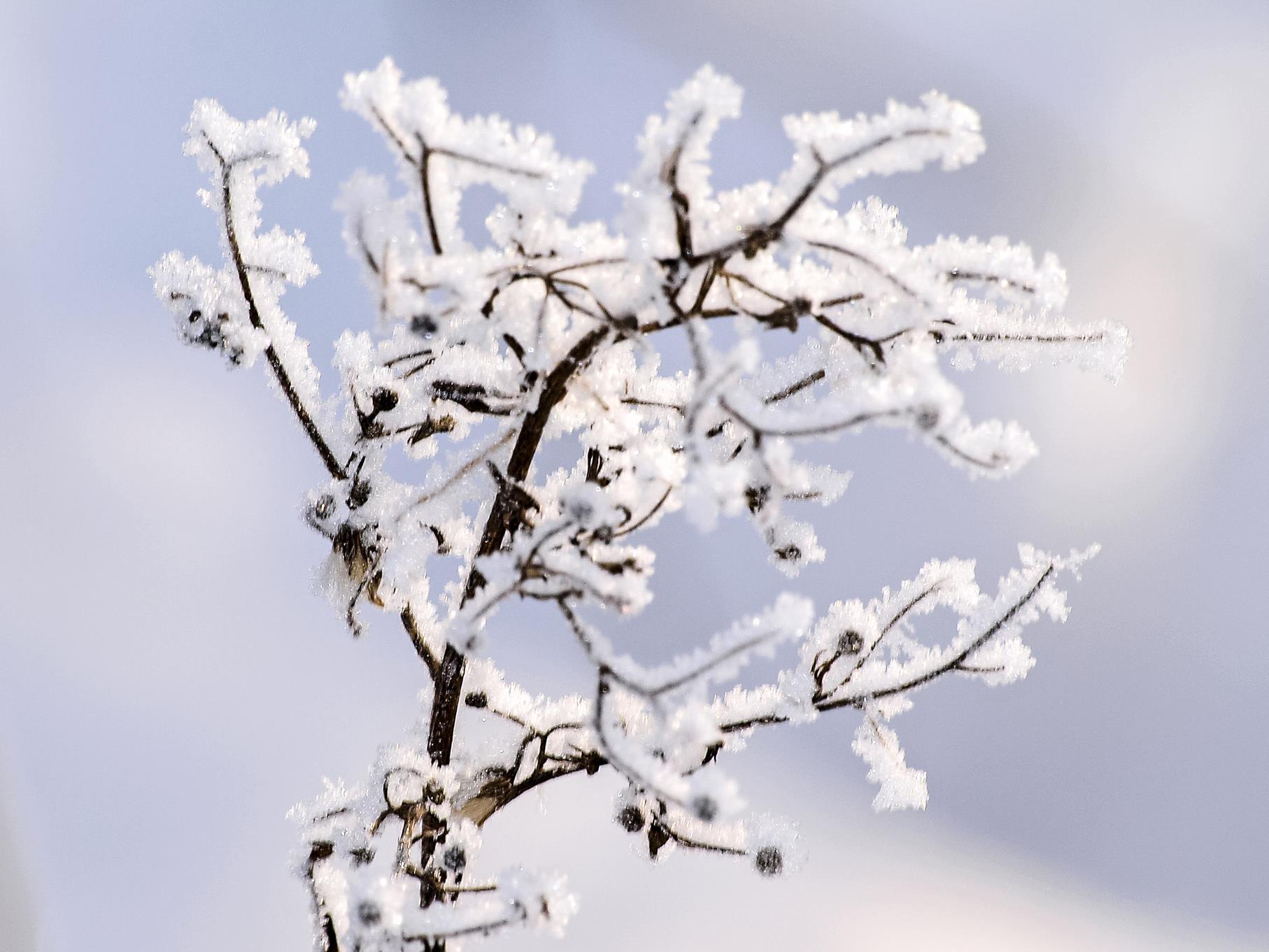 Die mit Eiskristallen überzogenen Pflanzen sehen wie kleine Kunstwerke aus.