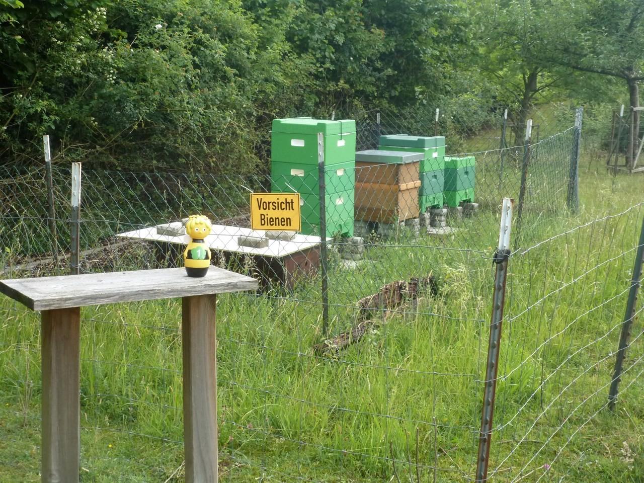 Hier sind die Bienen-Beuten auf der Streuobstwiese zu sehen. - Foto: Maren Matzeik