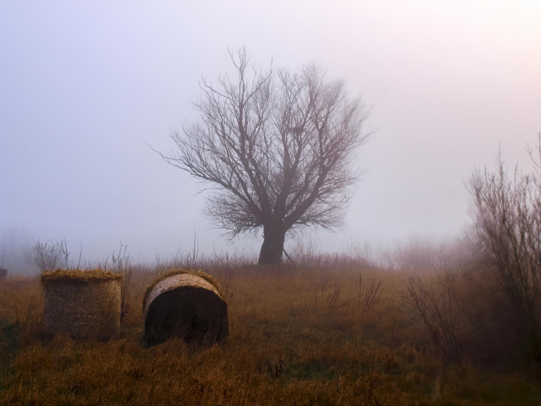 Eine Kopfweide im Nebel.