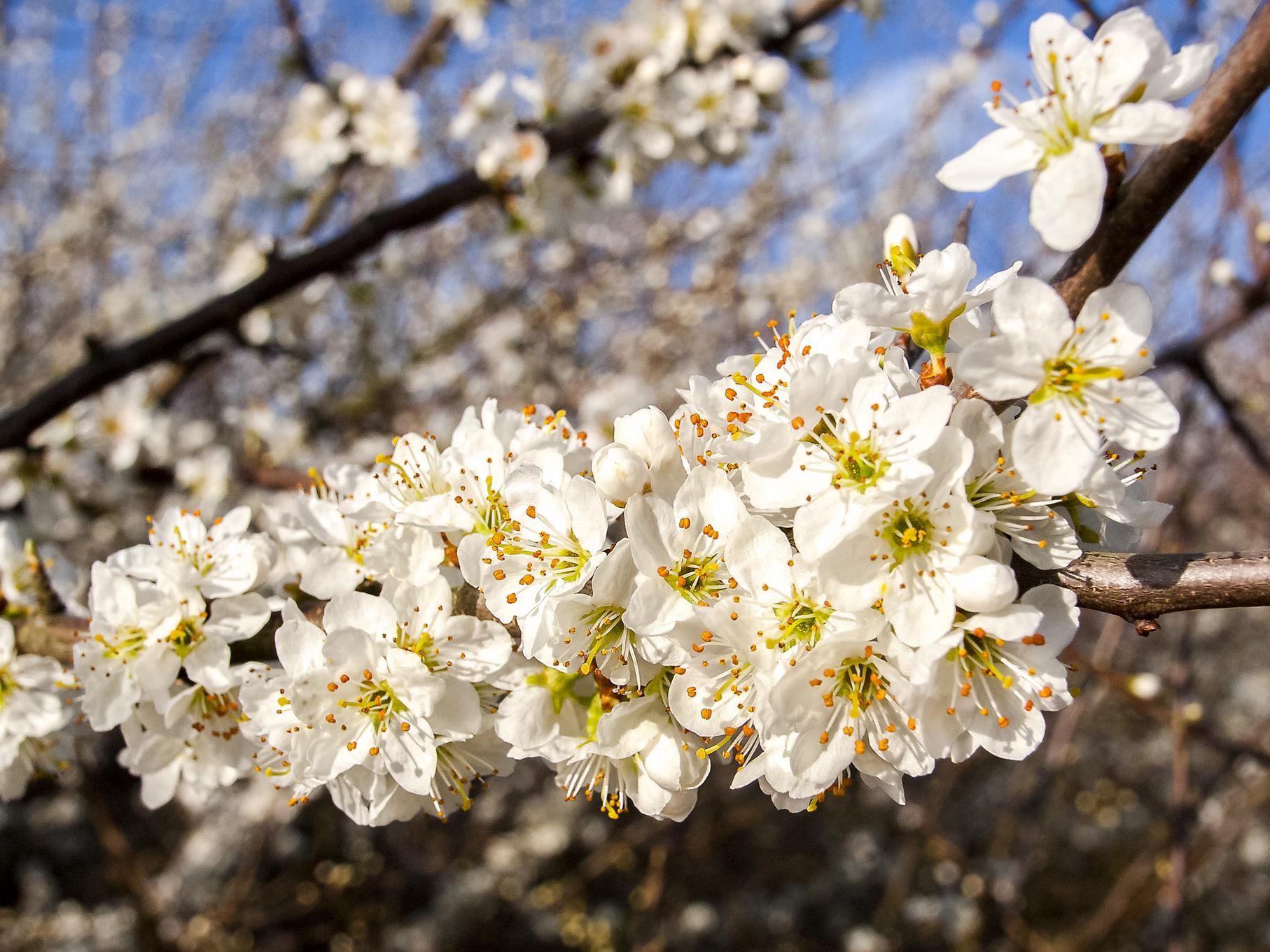 Im März kann man an den Bäumen die ersten Blüten entdecken.
