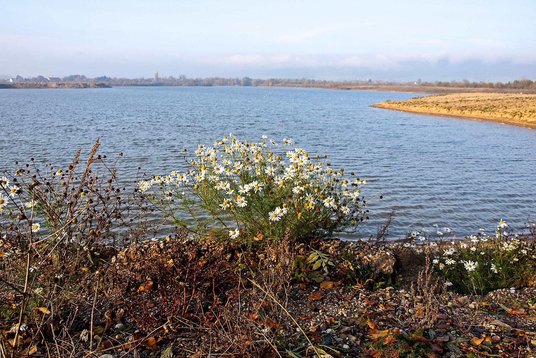Im November blühen am Ufer noch Pflanzen.
