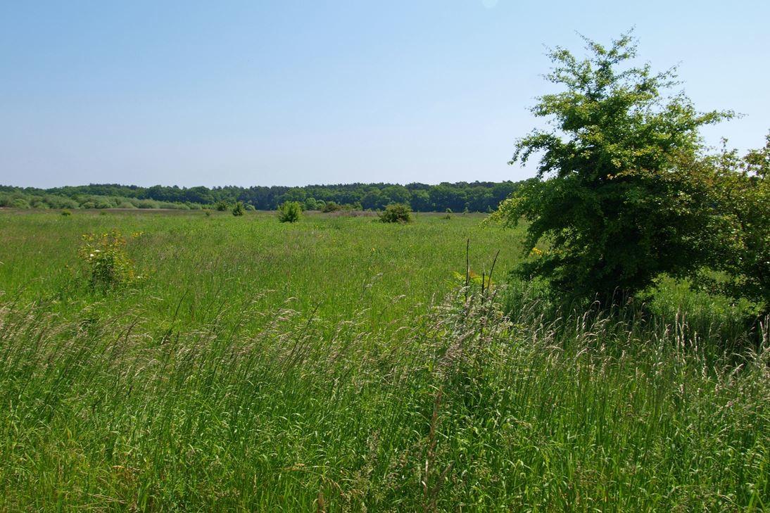Angrenzende Wiesenflächen sind wertvoller Lebensraum. - Foto: Kathy Büscher