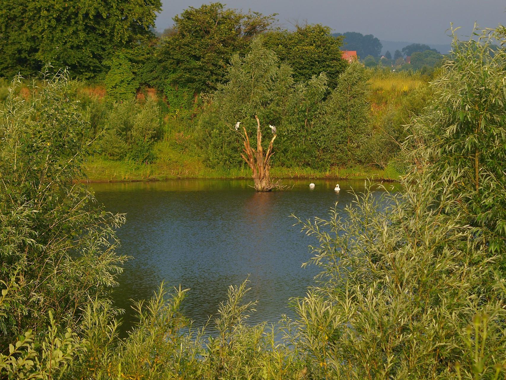 Impressionen aus der Auenlandschaft Hohenrode. - Foto: Kathy Büscher