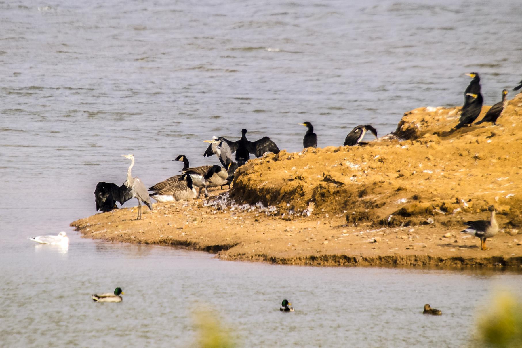 Artenvielfalt am Auen-Ufer.