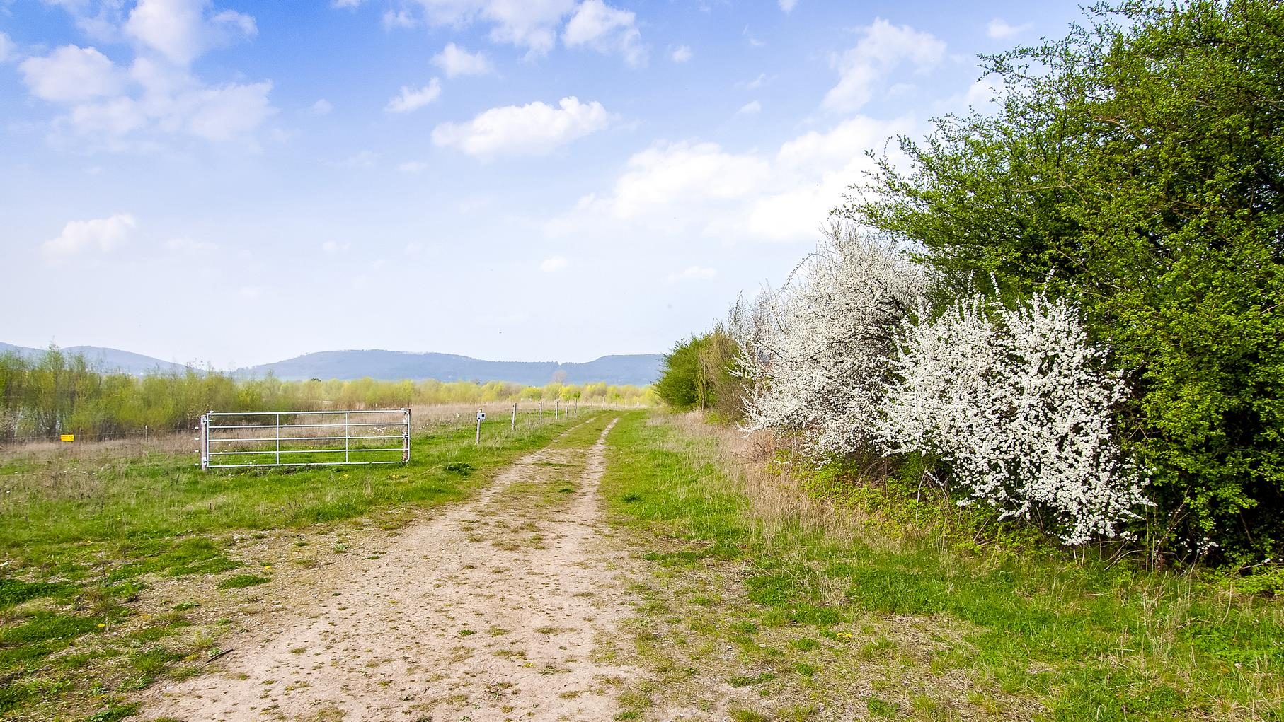 Am Rundweg blühen und grünen Bäume.