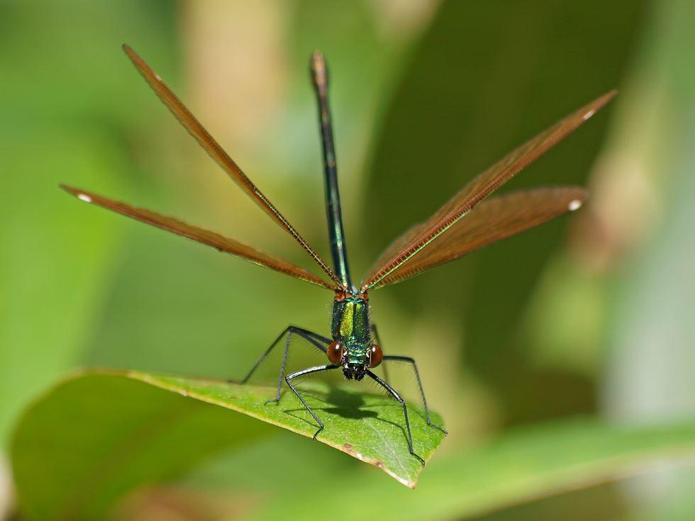 Auch Libellen gibt es zu beobachten. - Foto: Kathy Büscher