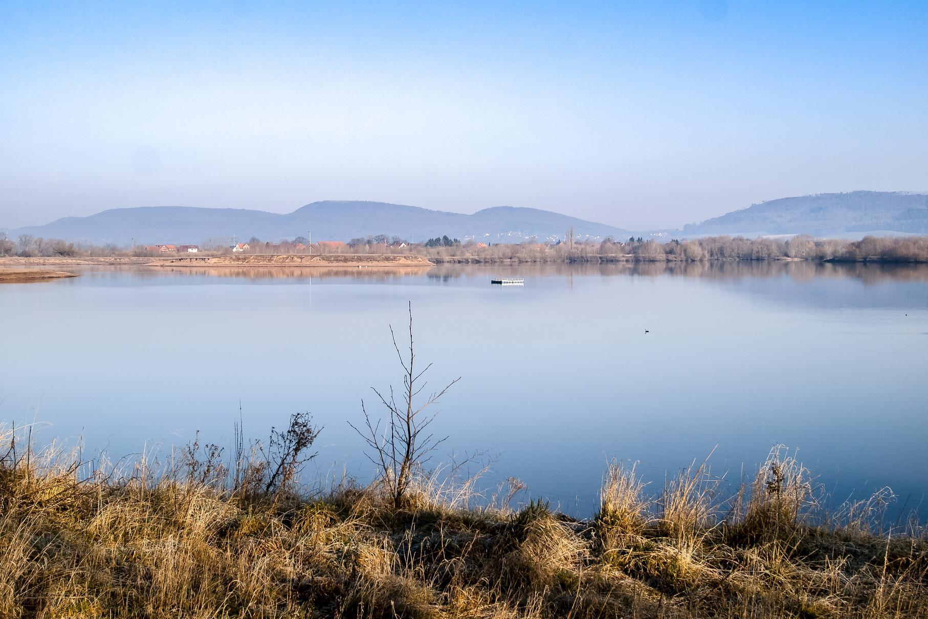 Der westliche Teich mit dem Flussseeschwalbenfloß und dem Fischadlerhorst.