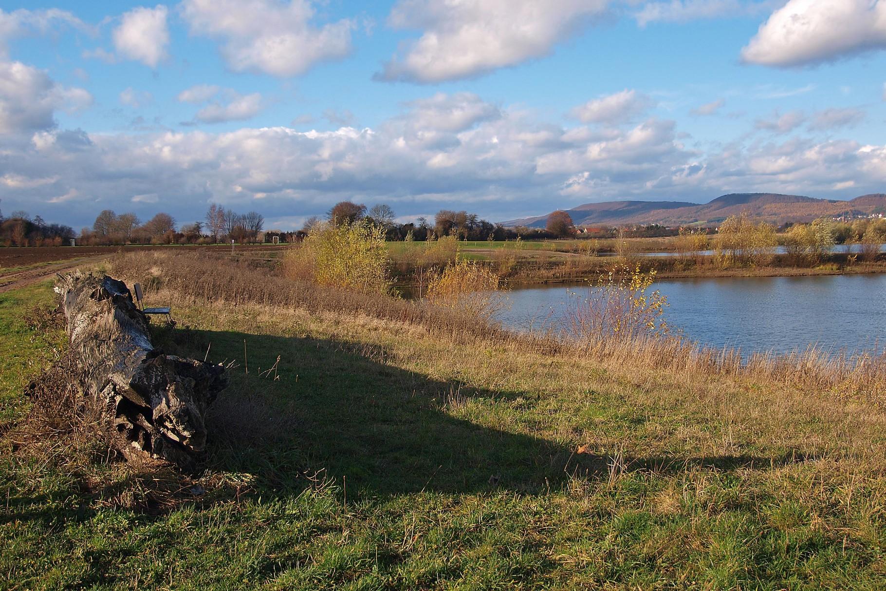 Mooreiche am östlichen Teich. - Foto: Kathy Büscher