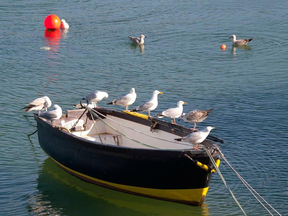 Boot mit Möwen in Mousehole. - Foto: Kathy Büscher