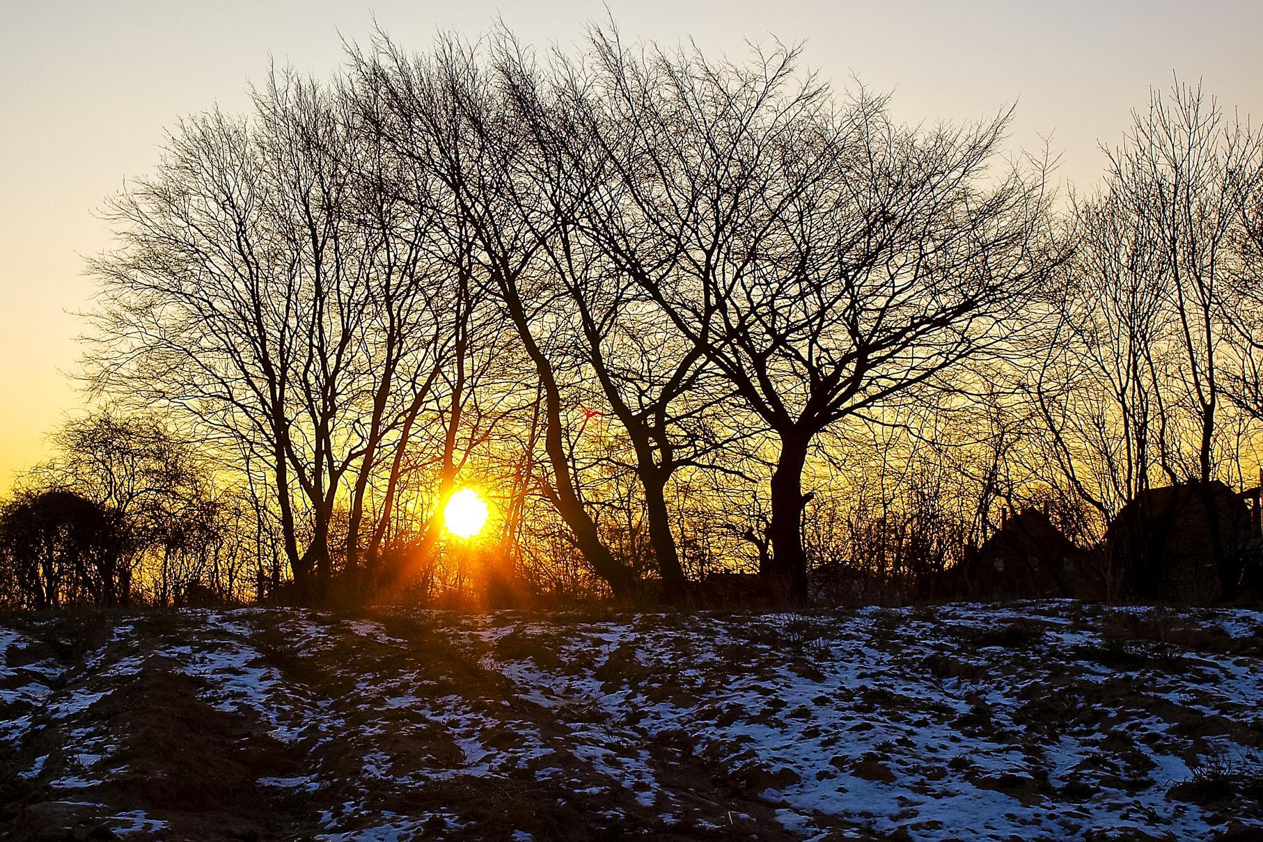 Die Februarsonne scheint durch die noch unbelaubten Laubbäume am Rundweg.