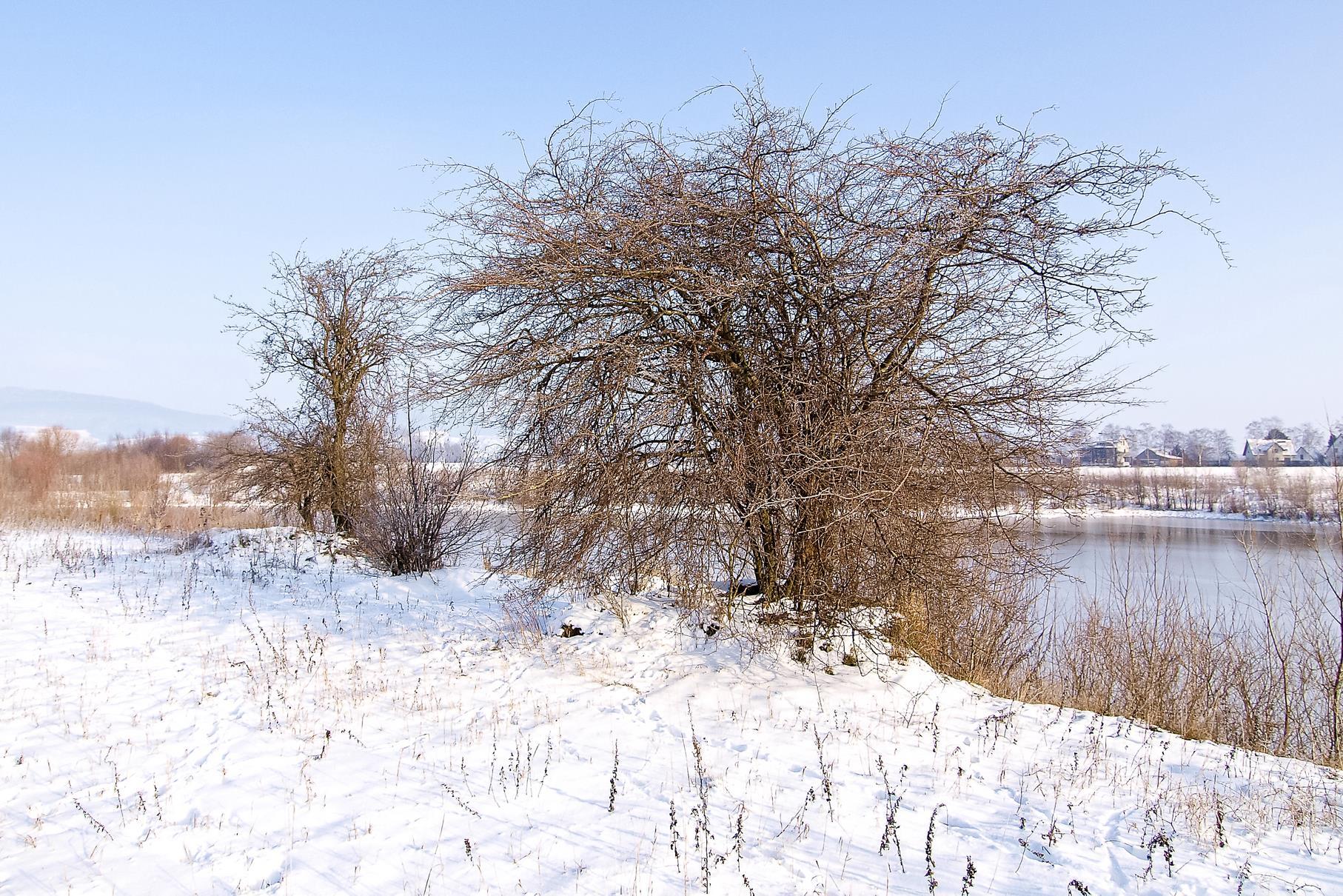 Der Rundweg und die Uferbereiche sind im Januar oft mit Schnee bedeckt.