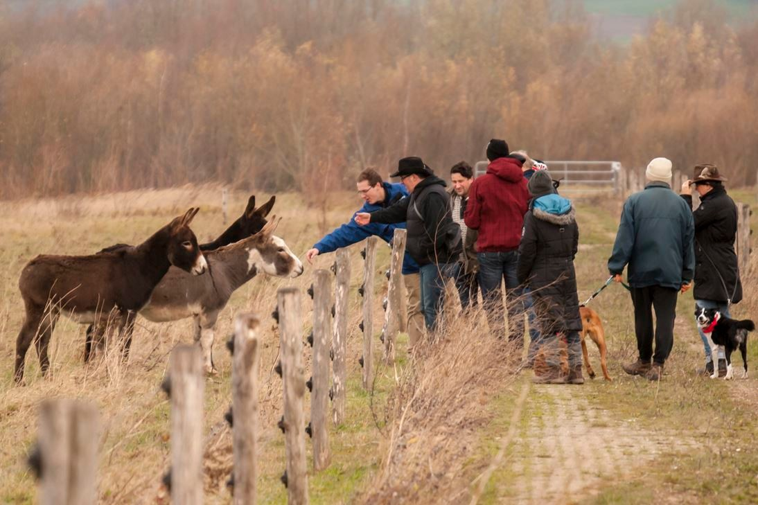 Exkursion in der Auenlandschaft Hohenrode. - Foto: Kathy Büscher
