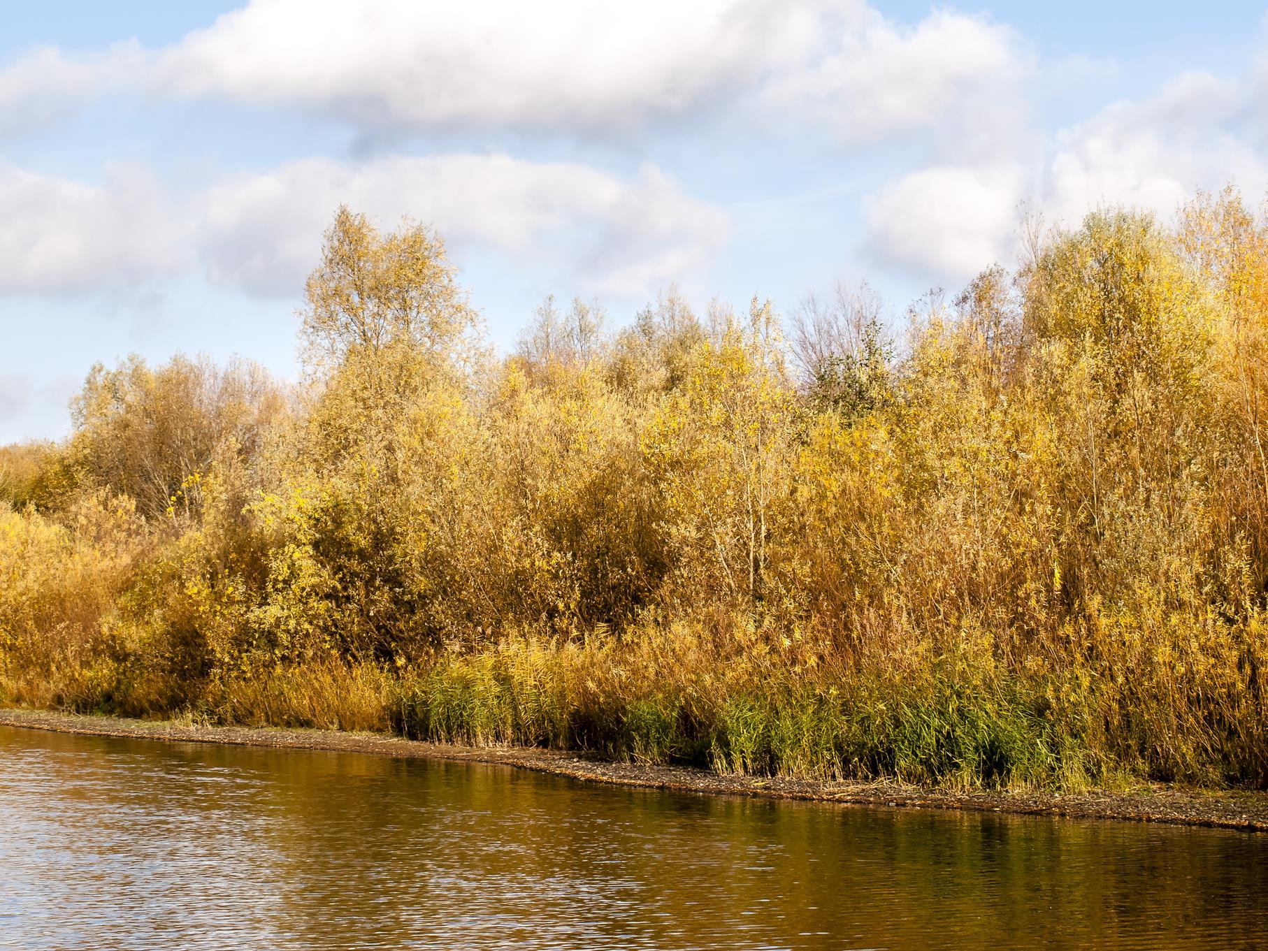 Goldene Farben am Ufer.