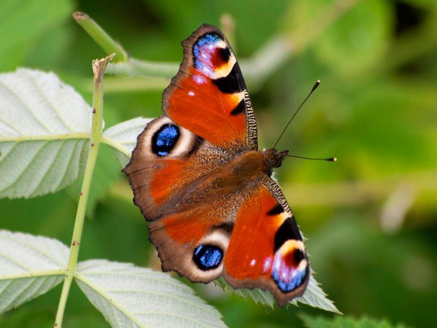 Viele Schmetterlinge flattern auf dem Gelände herum. - Foto: Kathy Büscher