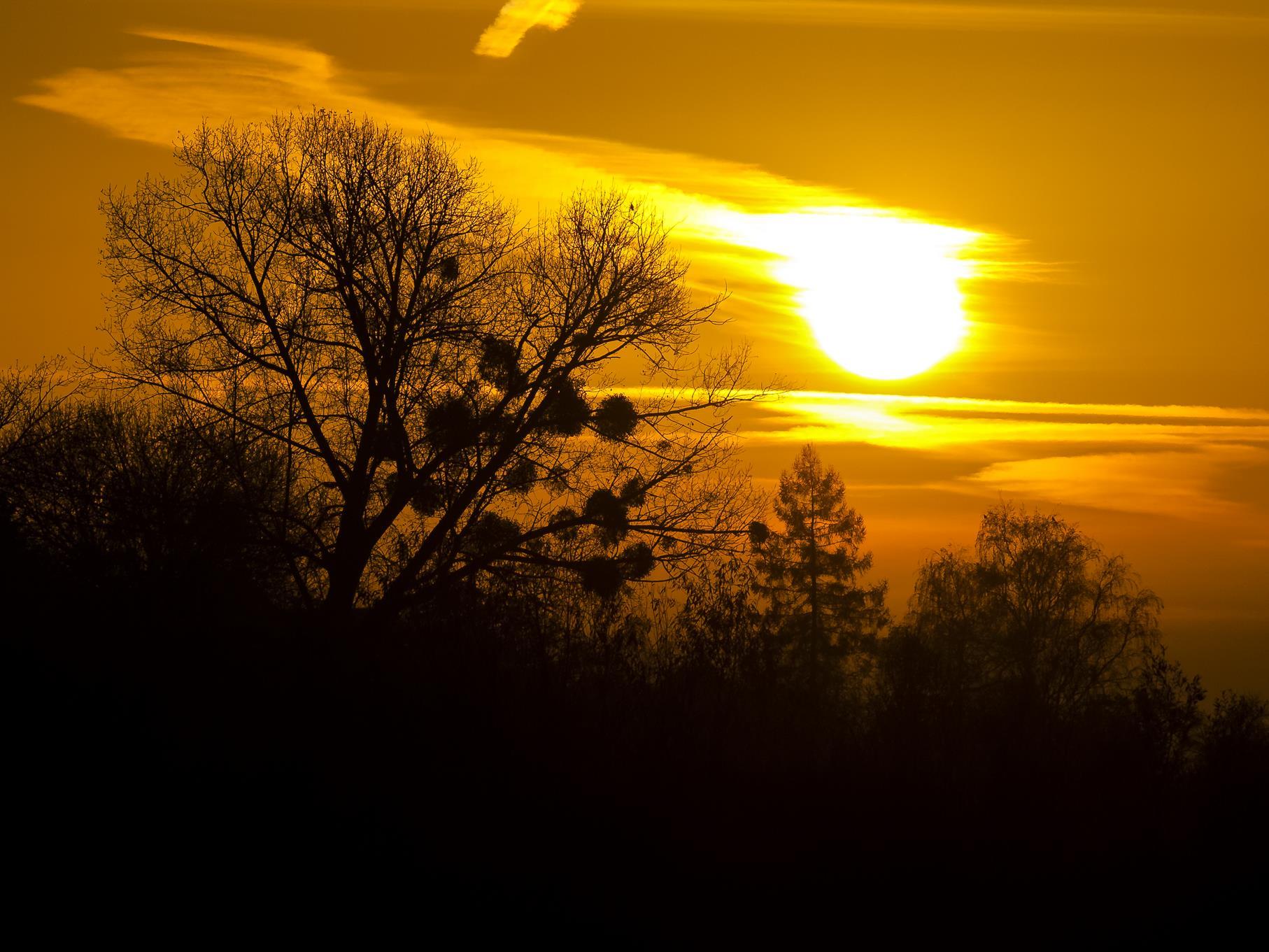 Kahle Bäume in der Morgensonne.