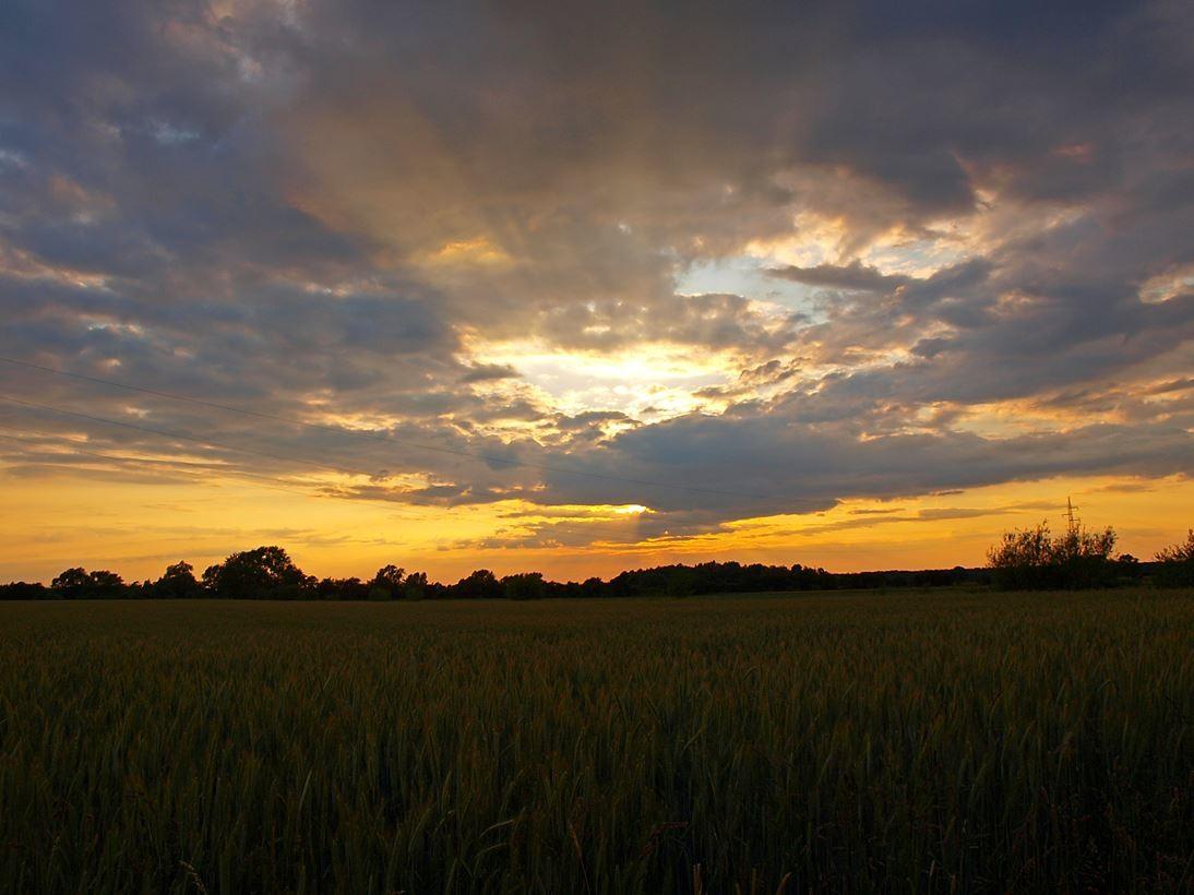 Sonnenuntergang in der Bückeburger Niederung. - Foto: Kathy Büscher