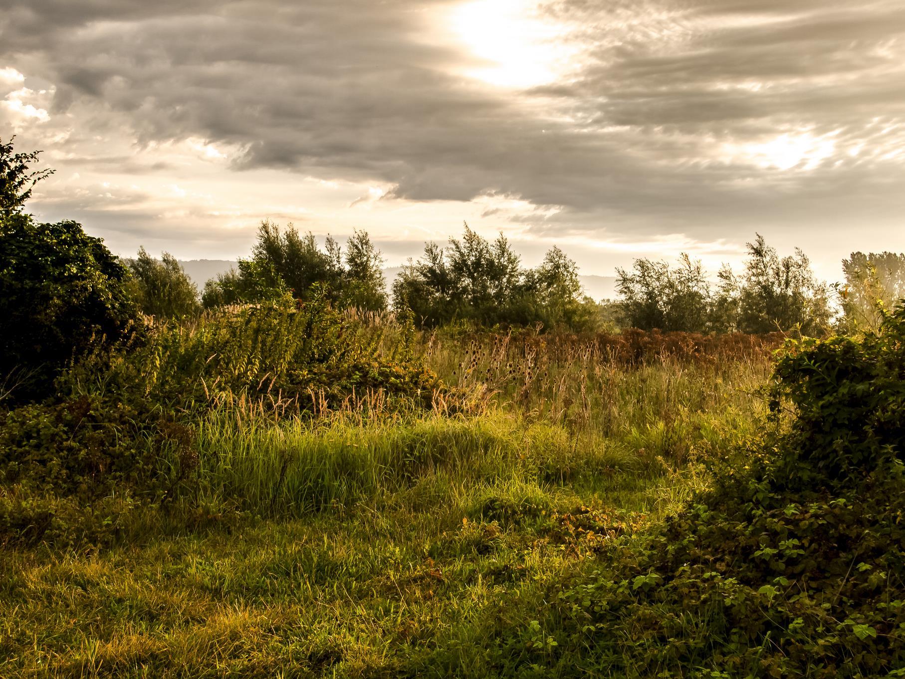 Die noch tiefstehende Morgensonne leuchtet die Pflanzen an.
