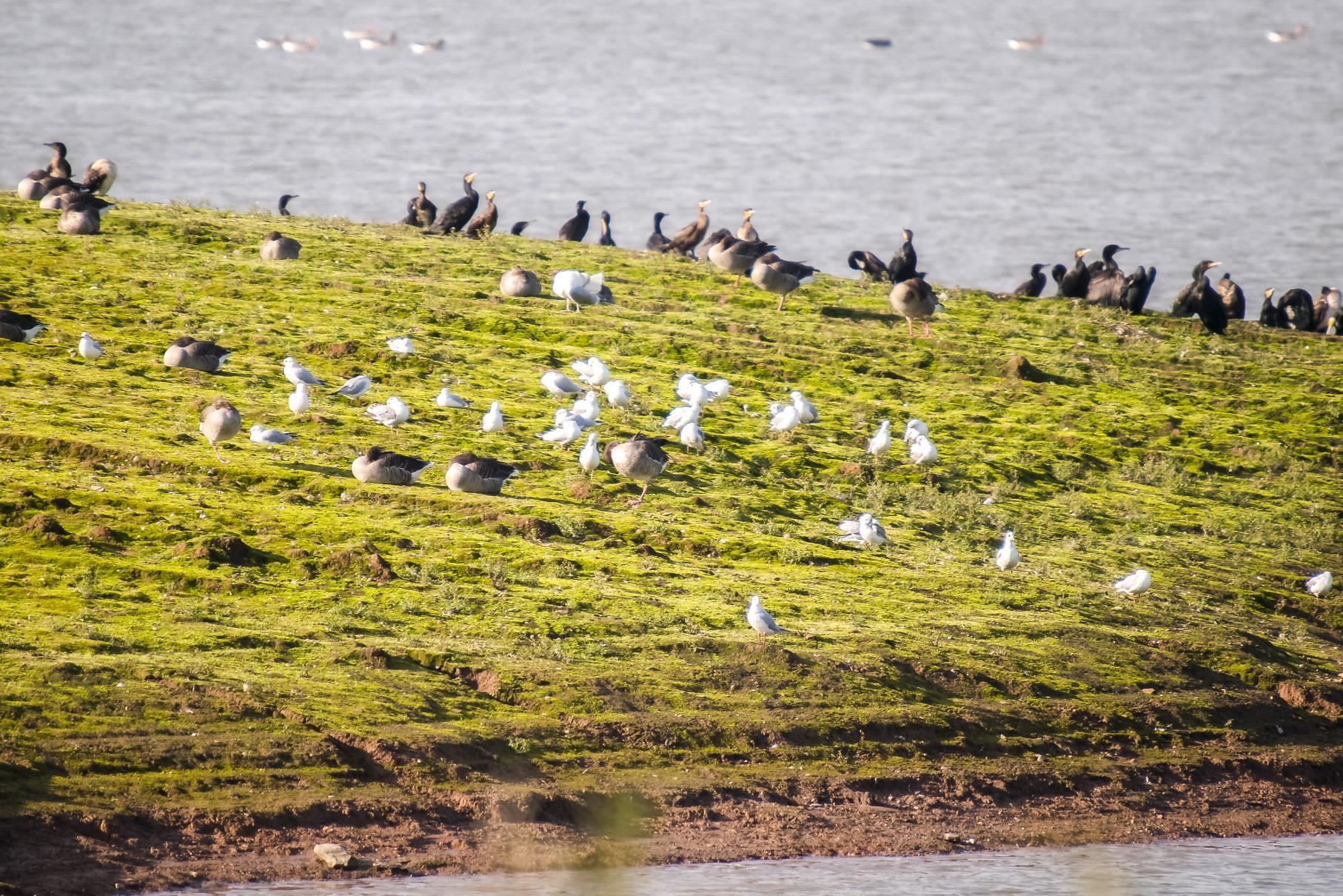 In der Auenlandschaft gibt es immer Wasservögel zu entdecken.