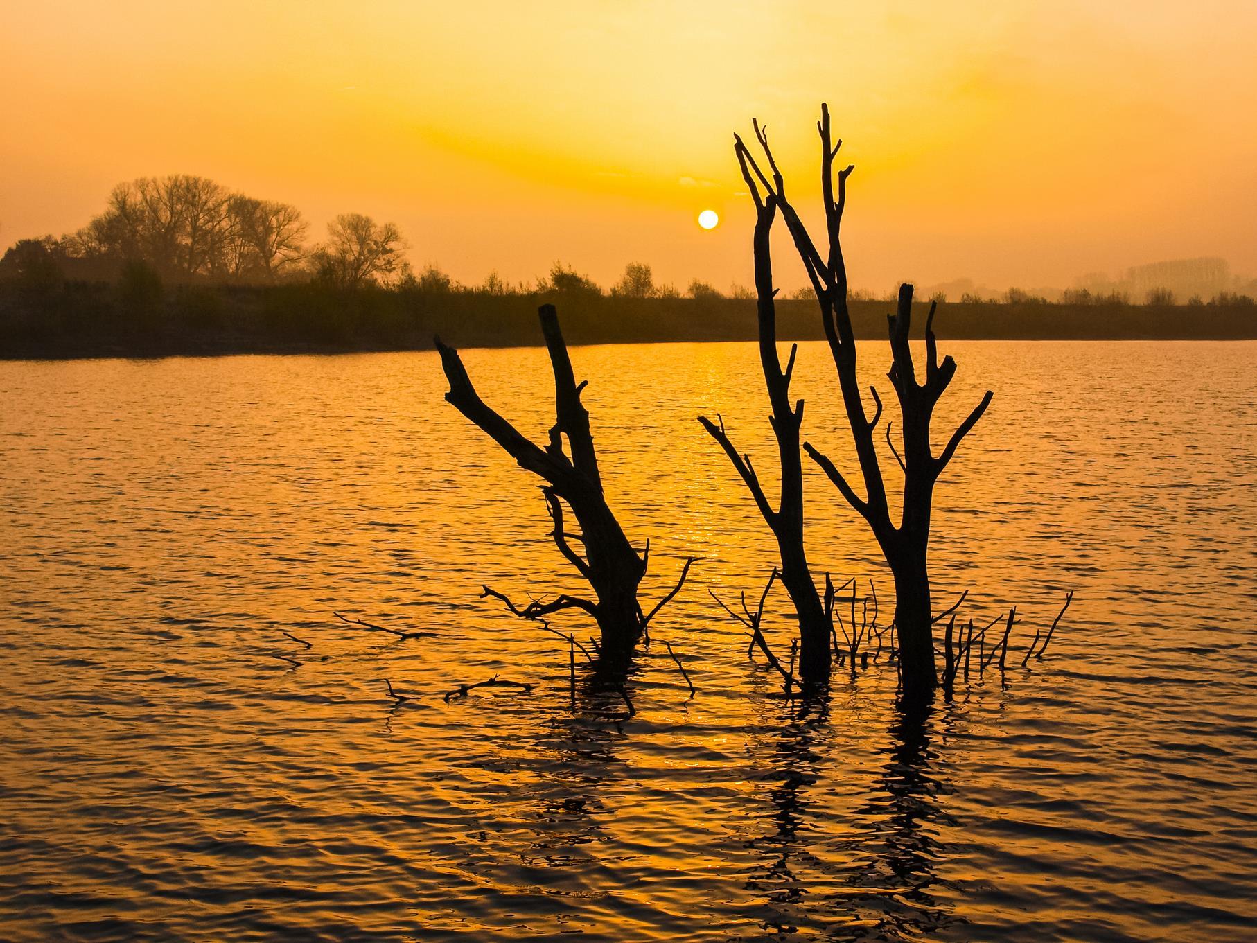 Die toten Bäume im Morgenlicht.