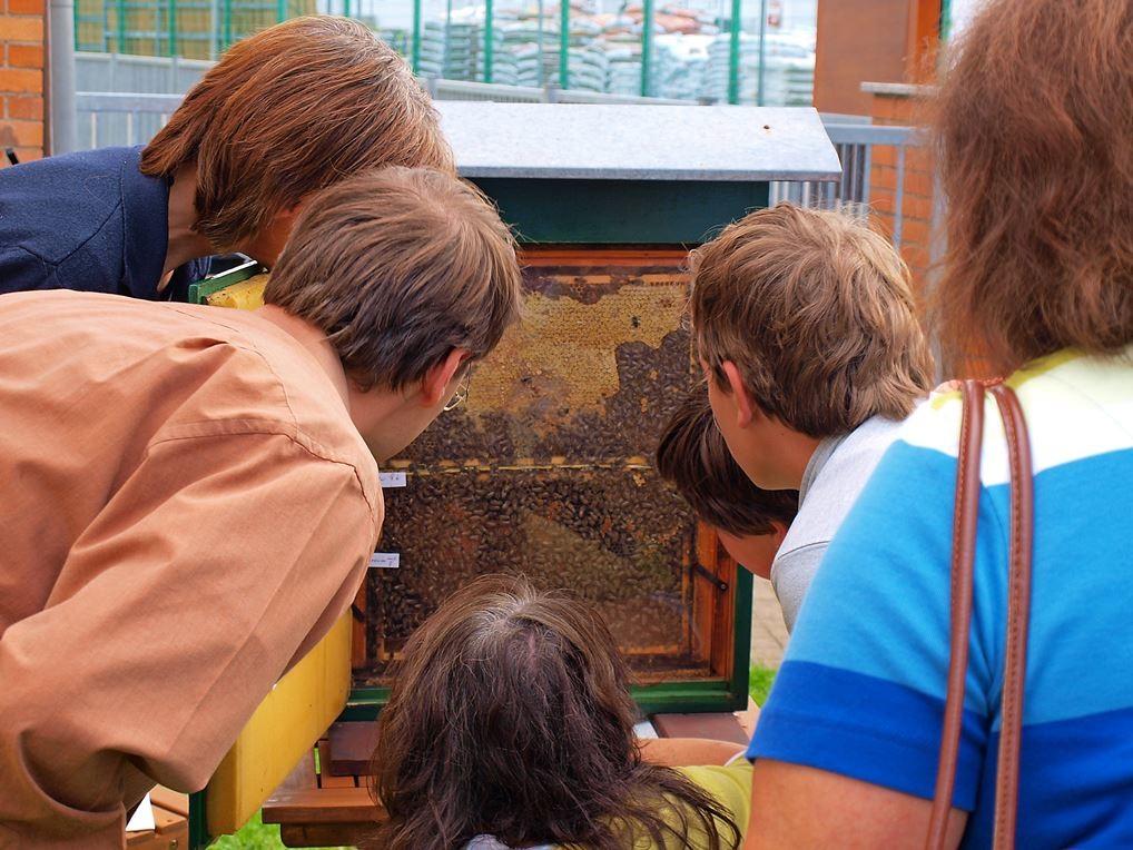 ...bei einem Bienennachmittag im NUZ. - Foto: Kathy Büscher