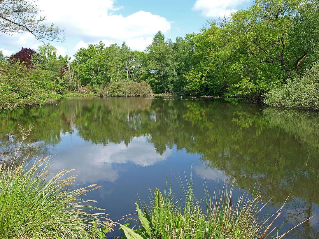Teich auf dem Gelände von NABU Gut Sunder. - Foto: Kathy Büscher