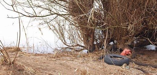 Viele achtlos weggeworfene Reifen finden sich in der Auenlandschaft wieder - angeschwemmt von der Weser. - Foto: Kathy Büscher