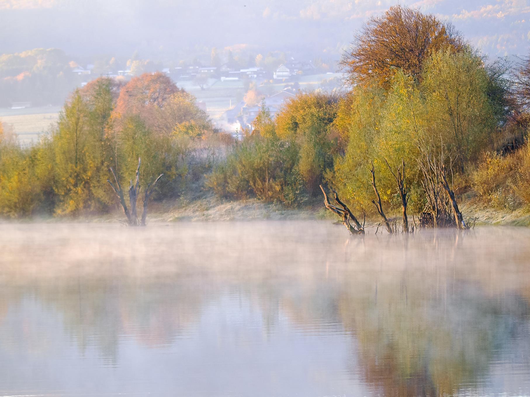 Die toten Bäume im östlichen Teich im morgendlichen Nebel.