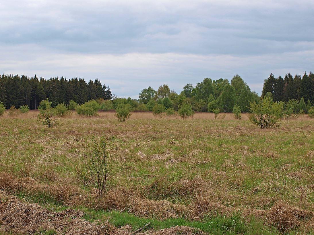 Eine Wanderung durch die Lüneburger Heide. - Foto: Kathy Büscher