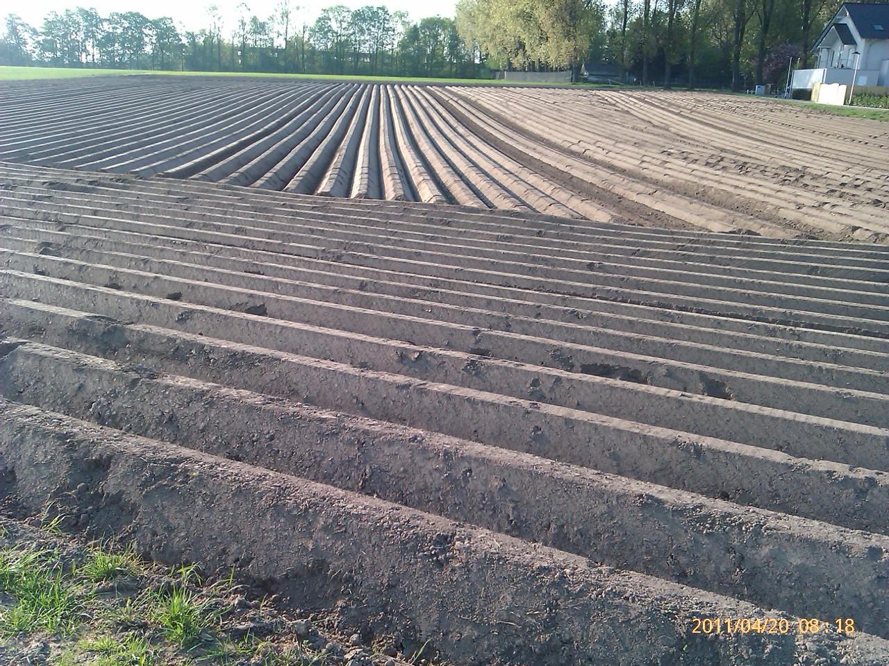 Kartoffelgräber