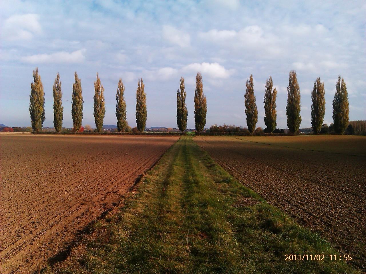 Orsbach 7 Pappeln