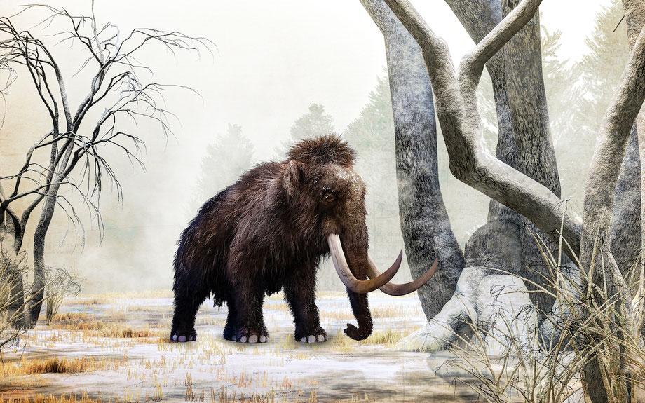 eiszeit safari im serengeti park neuheit 2019