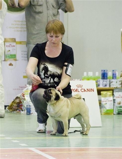 SIMBA ETERNAL Moja Lwia Rodzina - победитель класса