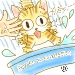 らくがき:野良子猫を洗ったら・・・