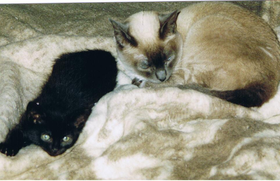 klein Sunny und Tiffany
