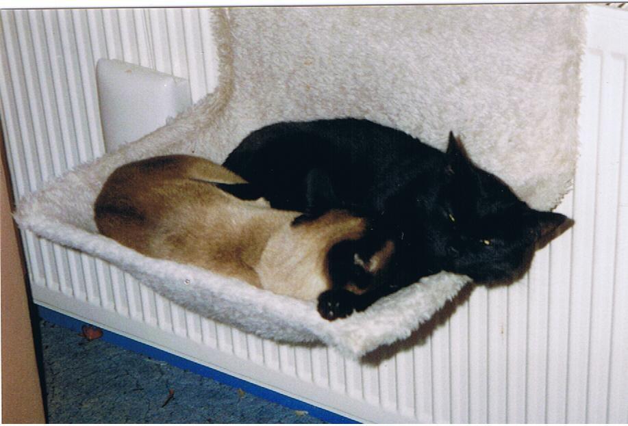 Sunny und Thaila kuscheln