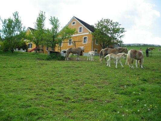 Pferde grassen bei uns