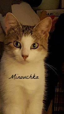 Minouchka