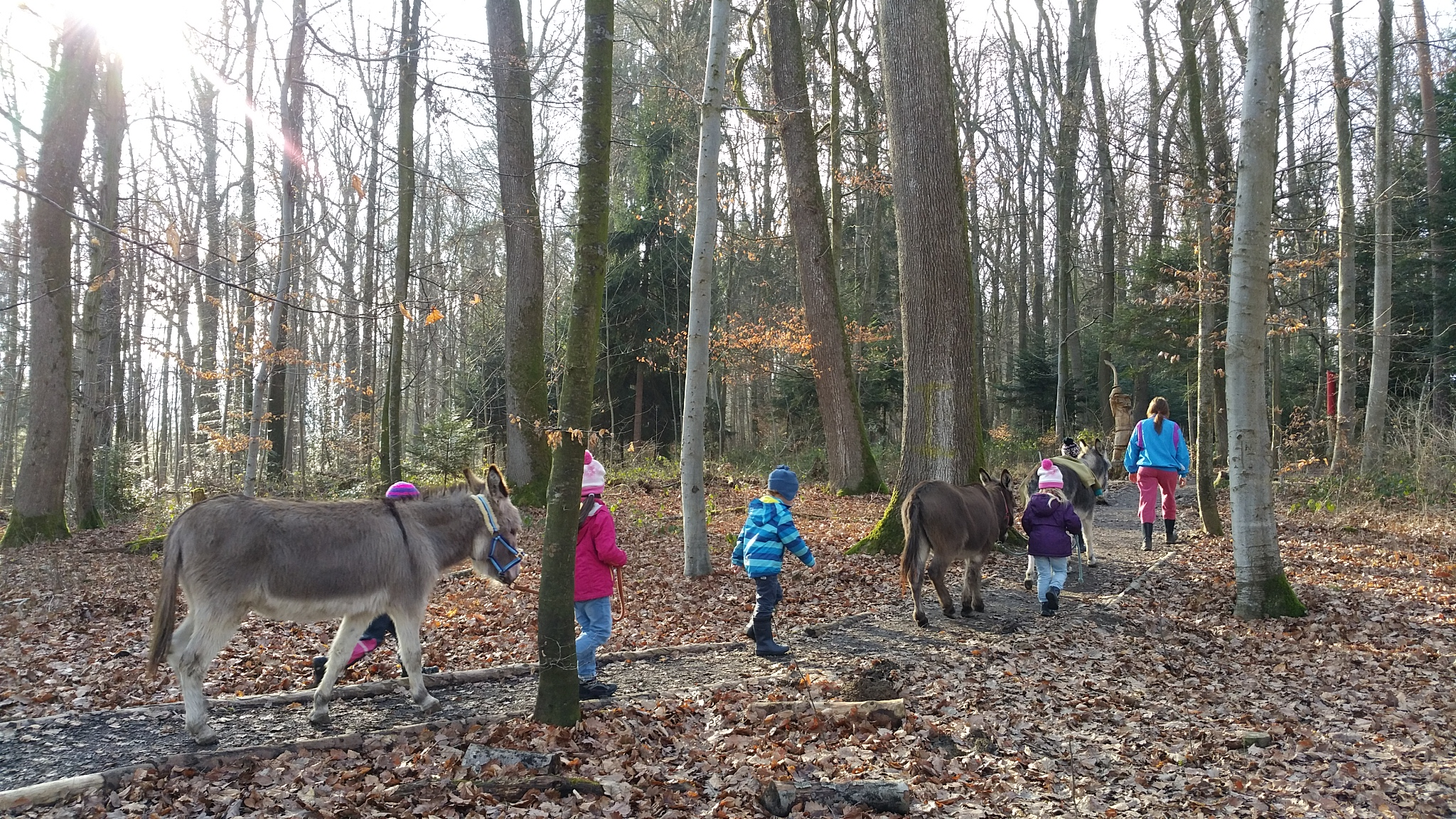 "Children`s group ""Les Amies des Anes"" (Friends of the donkeys)"