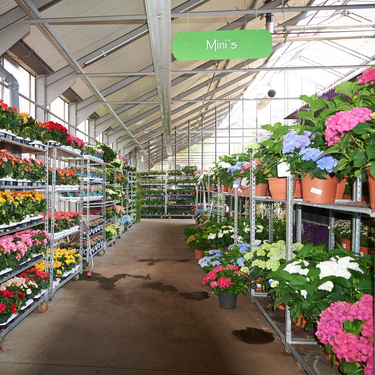 Blühpflanzen Abteilung