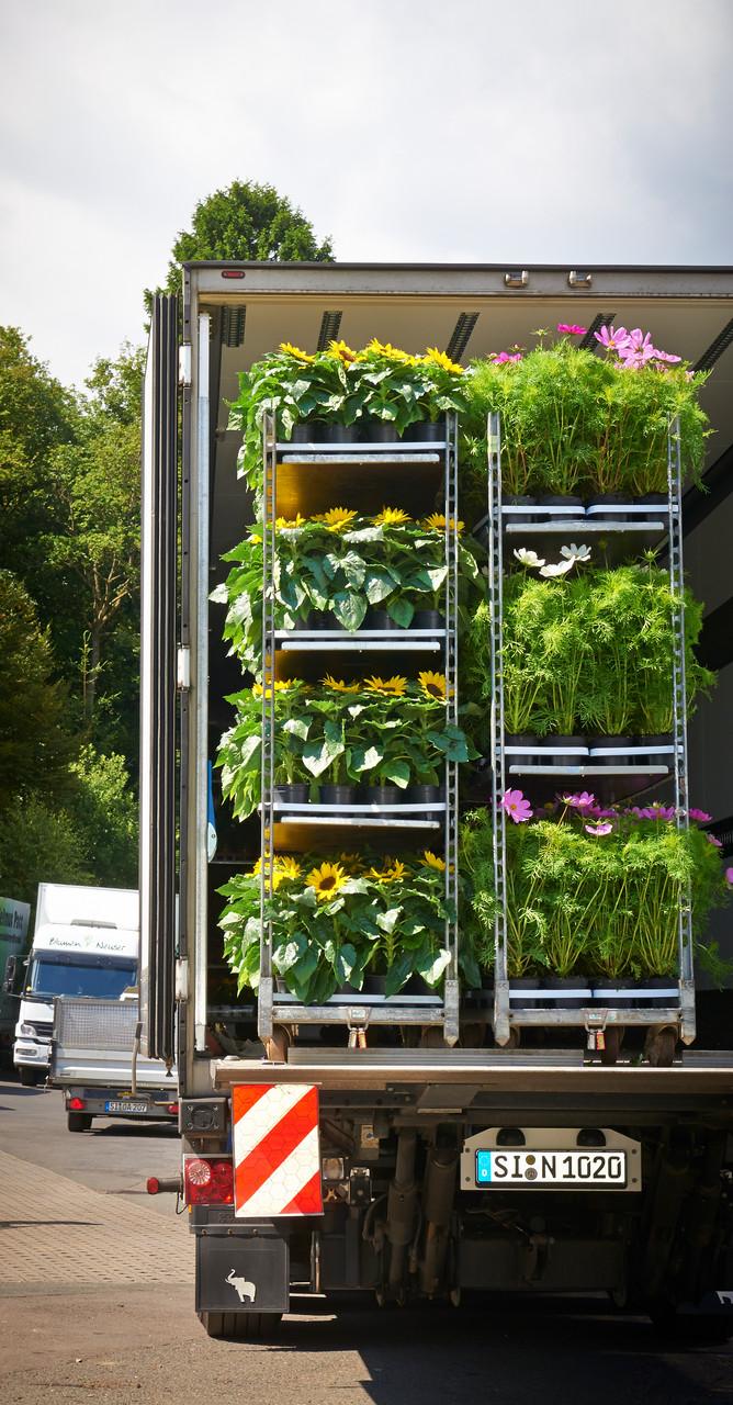 Frische Ware kommt...Sonnenblumen und Cosmea