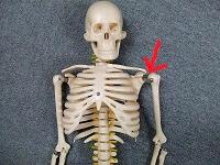肩関節を示した画像