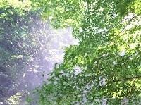 気持ちがリラックスする森林浴の画像