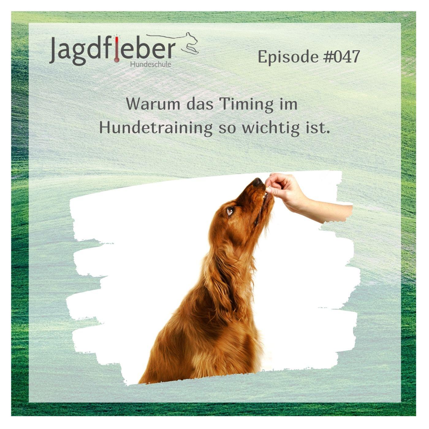 P047: Warum das Timing im Hundetraining so wichtig ist