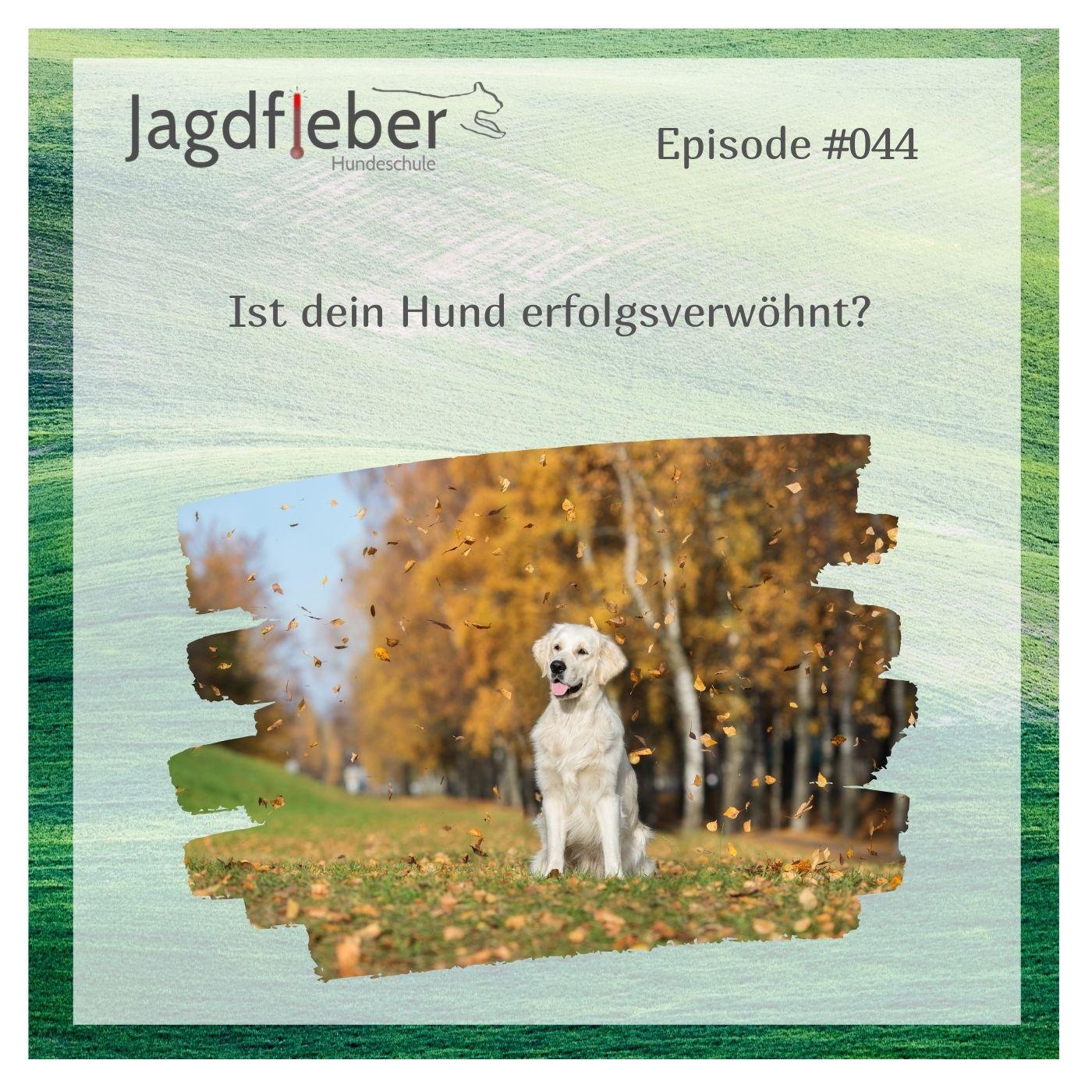 P044: Ist dein Hund erfolgsverwöhnt?